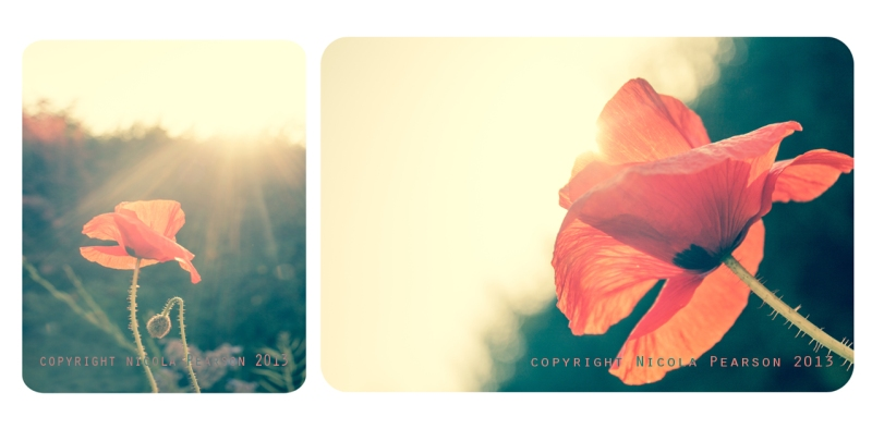 Blinded By The Light Diptych Copyright Nicola Pearson 2013